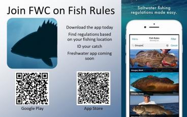 A new app helps fishermen identify species and regulations quickly.